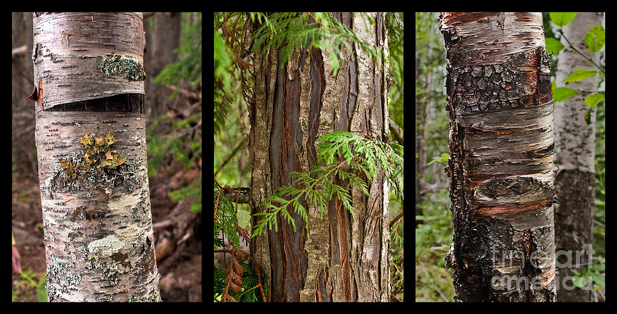 Tree Wear By Nature Photograph