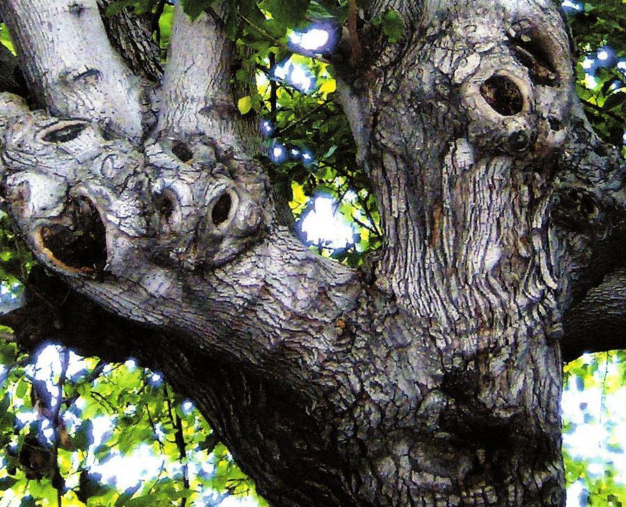 Tree Photograph - Tree With A Heart by Dan Twyman