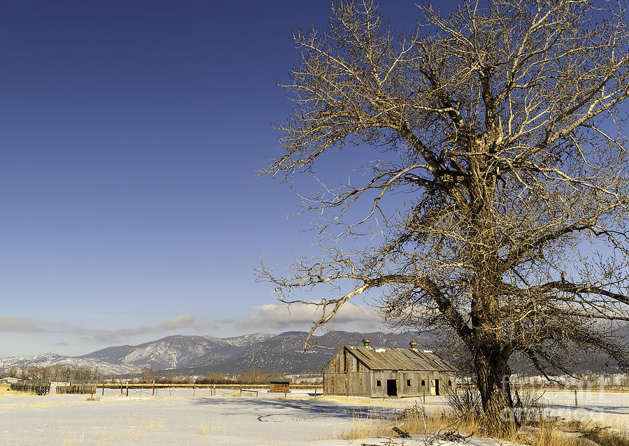 Agriculture Photograph - Tree With Barn by Sue Smith
