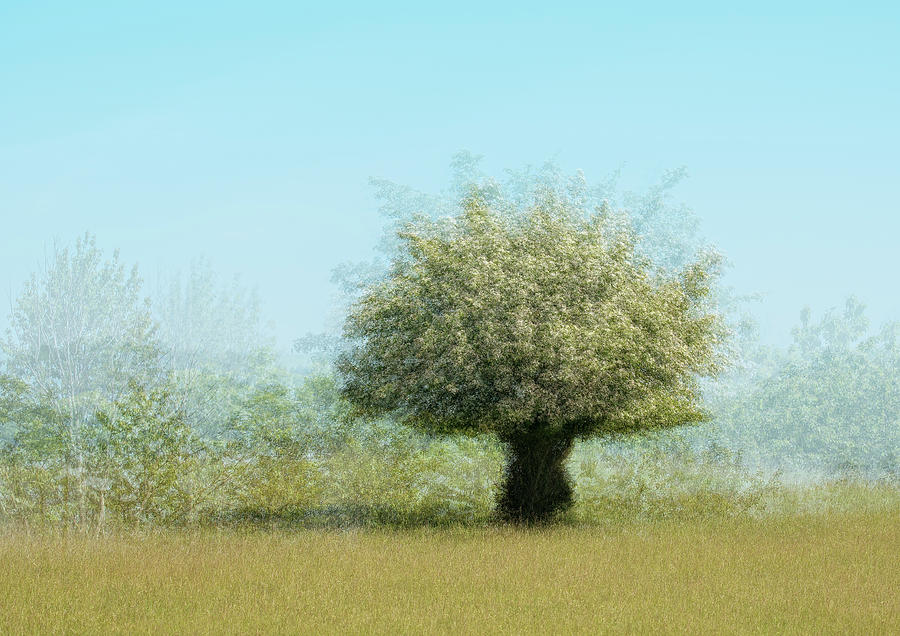 Lonely Tree Photograph - Tree With Flowers by Katarina Holmstr??m