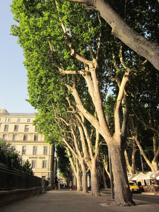 Avenue Photograph - Treed Avenue by Pema Hou