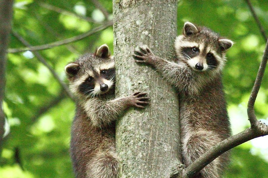 Treehuggers Photograph by Alina Morozova