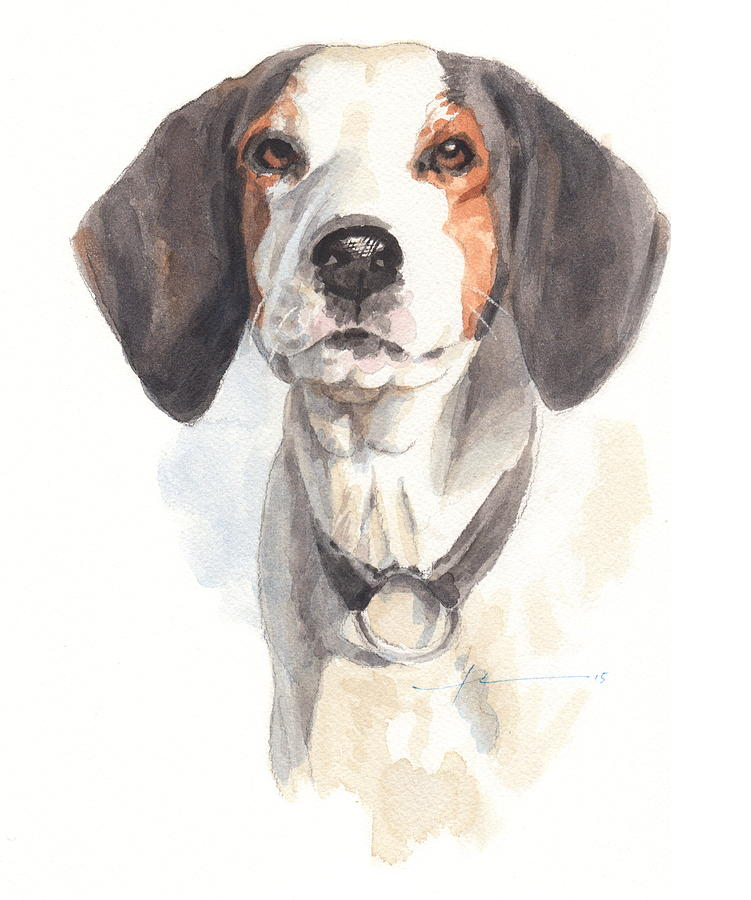 Treeing Walker Coonhound Drawing by Mike Theuer