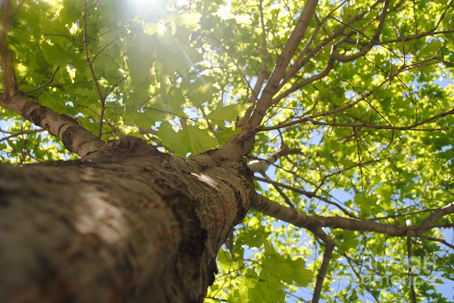 Trees 002 Digital Art