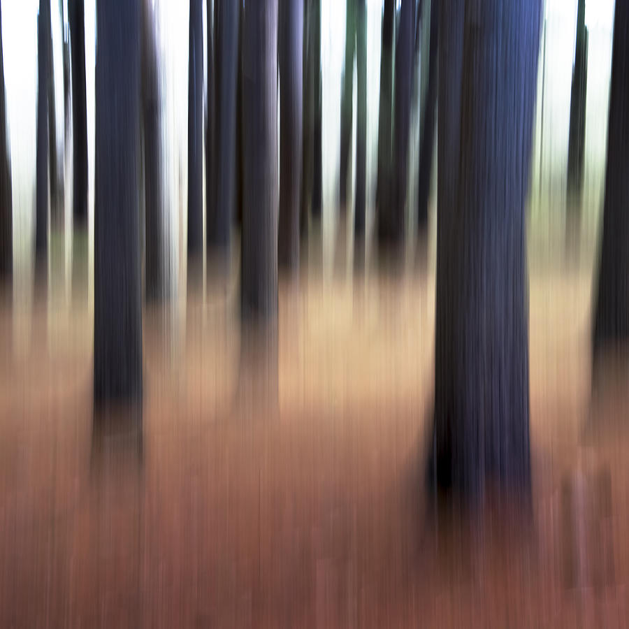 Crane Estate Photograph - Trees #3 by David Stone