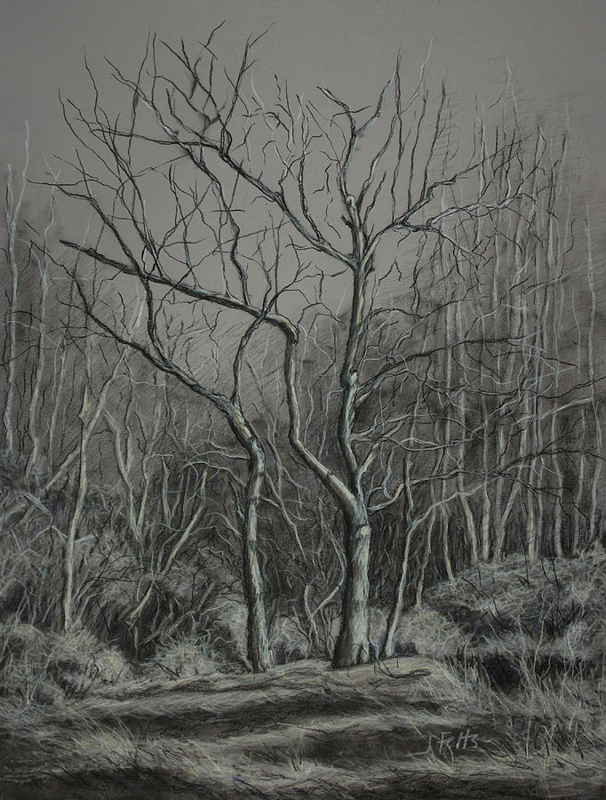 Trees Drawing - Trees Along The Greenway by Janet Felts