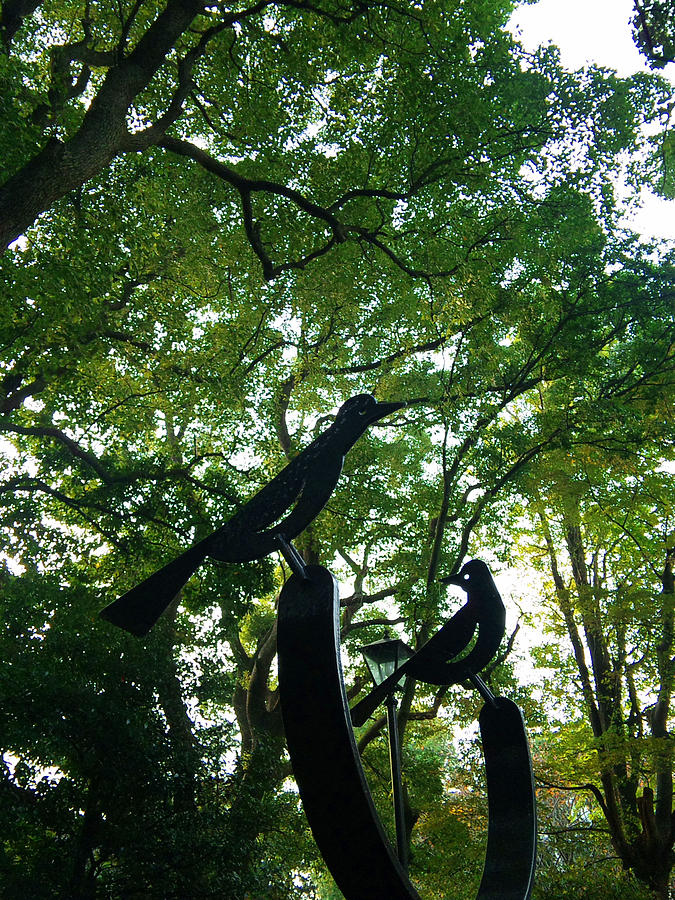 Trees Photograph - Trees And Black Birds In The Park by Chikako Hashimoto Lichnowsky