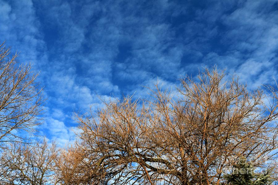 Photograph - Trees And Clouds by Jay Nodianos