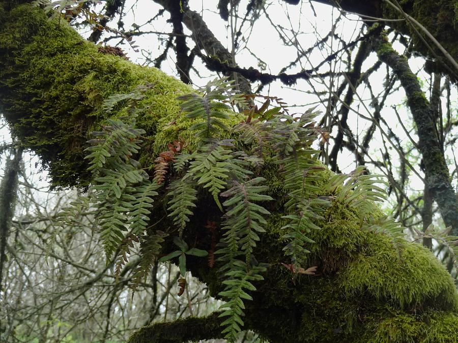 Refuges Photograph - Trees And Ferns And Moss Ecosystem by Lizbeth Bostrom