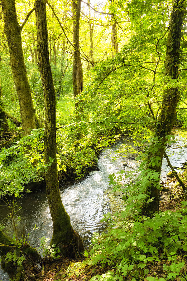 Trees And River In Spring Schaichtal Valley Schoenbuch Germany Photograph