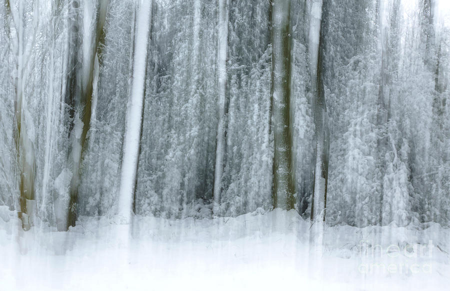 Trees Photograph - Trees And Snow Abstract by David Birchall