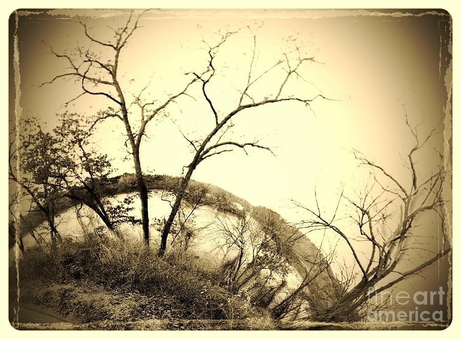 Trees Photograph - Trees And The Curve Of The Earth by Garren Zanker