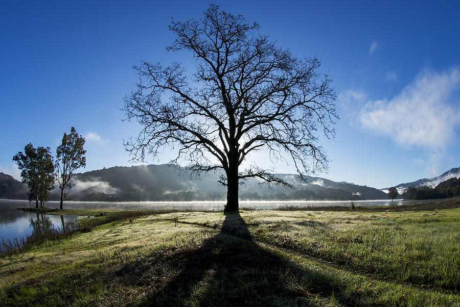 Tree Photograph - Trees Are Us by Sean Foster