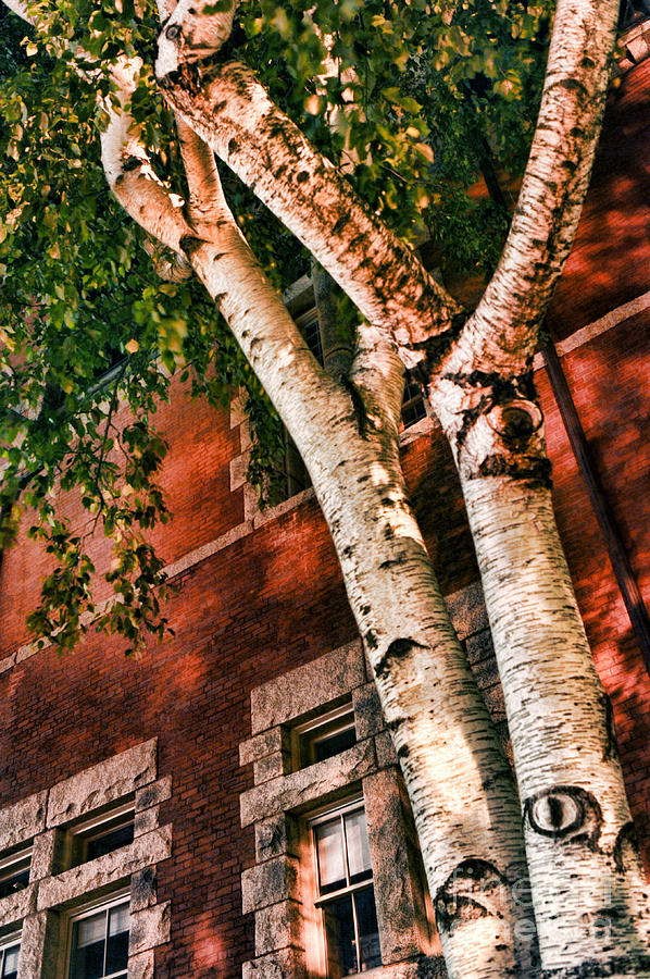 Trees Photograph - Trees At Night by HD Connelly