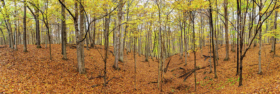 Horizontal Photograph - Trees In A Forest, Stephen A. Forbes by Panoramic Images