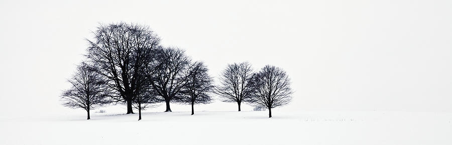 Rural Photograph - Trees In A Snowy Field In Chatsworth by John Doornkamp