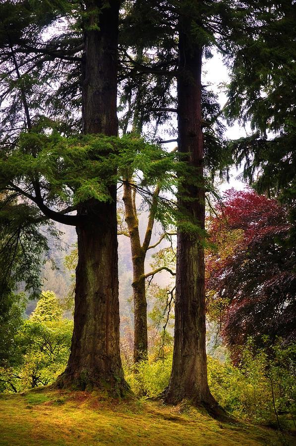 Landscape Photograph - Trees In Autumn Glory. Scotland by Jenny Rainbow