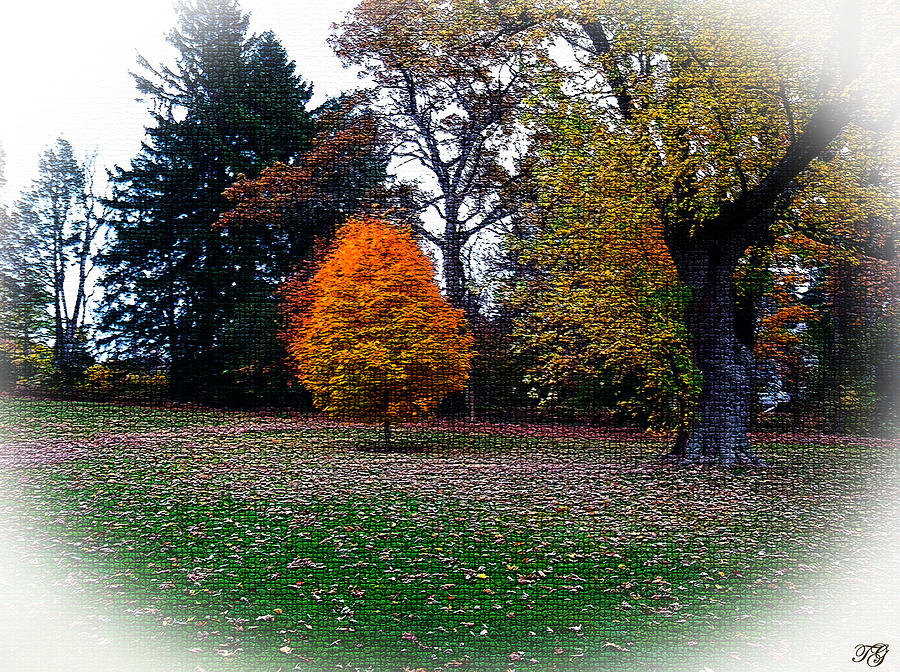 Trees In Autumn Mixed Media