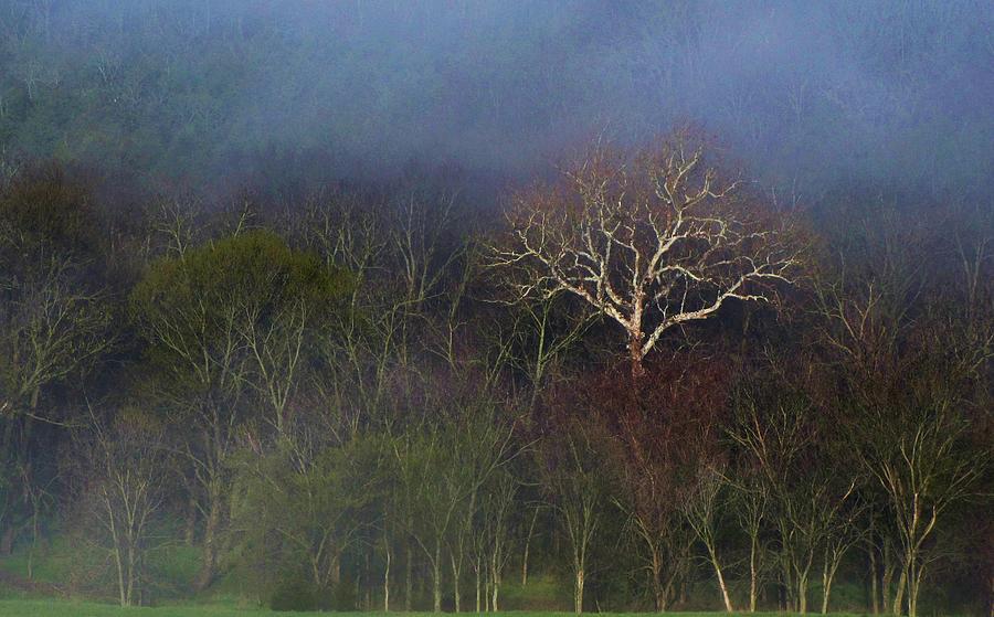 Landscape Photograph - Trees In Fog 4 by Dena Kidd