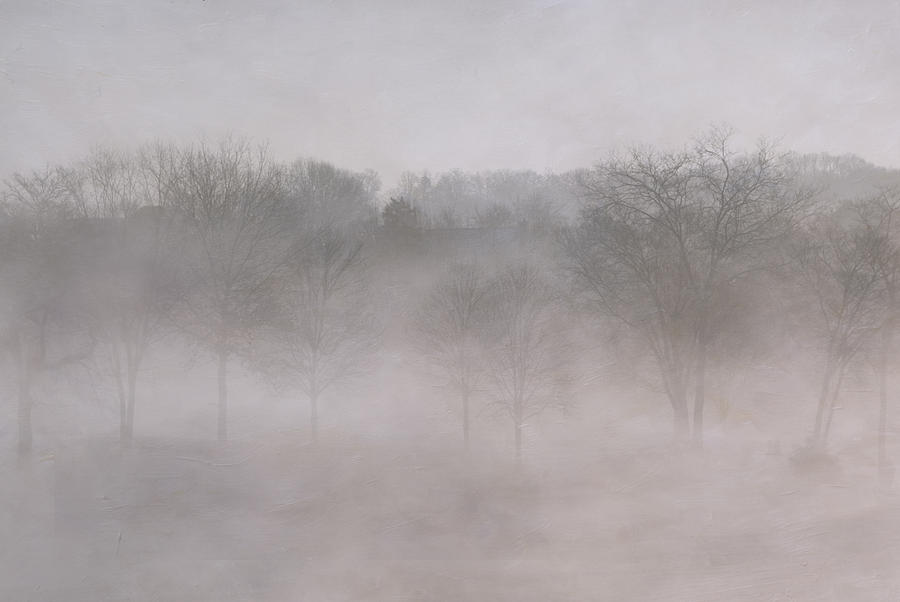 Trees Photograph - Trees In Fog by Carol Erikson