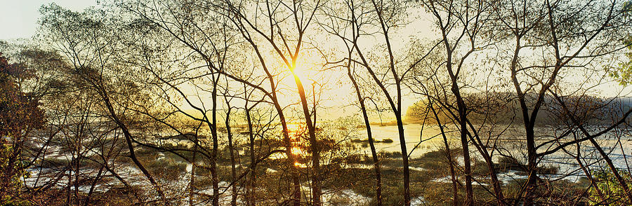 Horizontal Photograph - Trees In Marsh, Maine, Usa by Panoramic Images