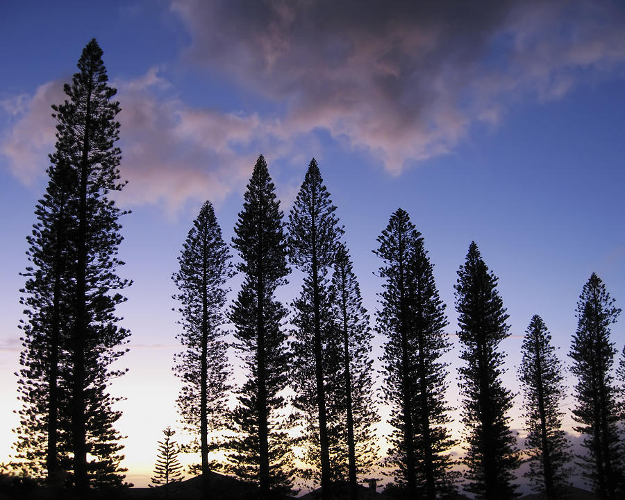 Abstract Photograph - Trees In Silhouette by Adam Romanowicz