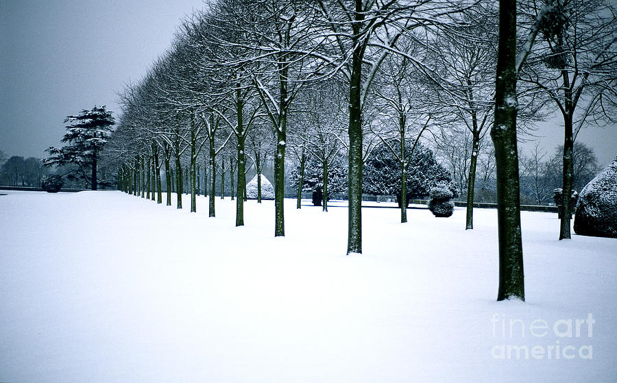 Trees Photograph - Trees In Snow by Lana Enderle
