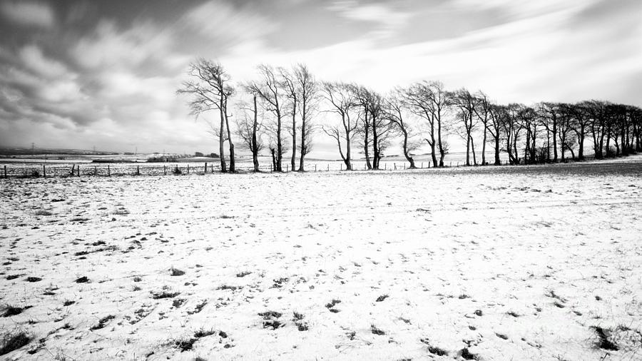 Snow Photograph - Trees In Snow Scotland Iv by John Farnan