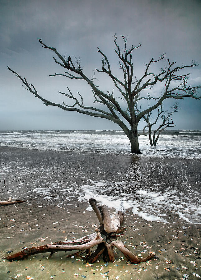 Ocean Photograph - Trees In Surf by Steven Ainsworth