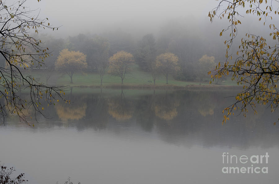 Trees Photograph - Trees In The Fog by Stephanie Emond