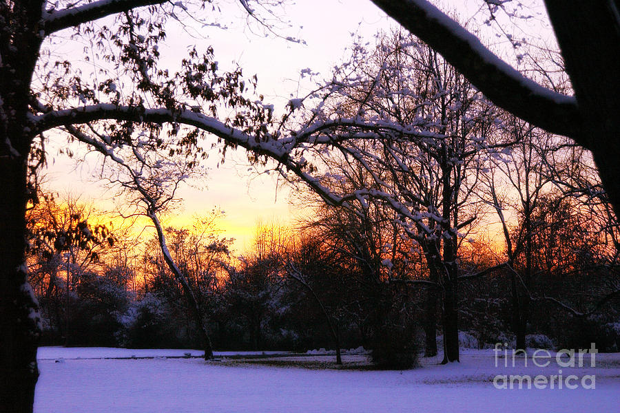 Snow Photograph - Trees In Wintry Pennsylvania Twilight by Anna Lisa Yoder
