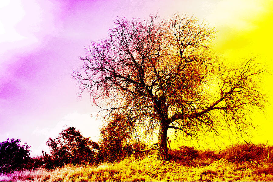 Tree Photograph - Trees by Jesus Nicolas Castanon
