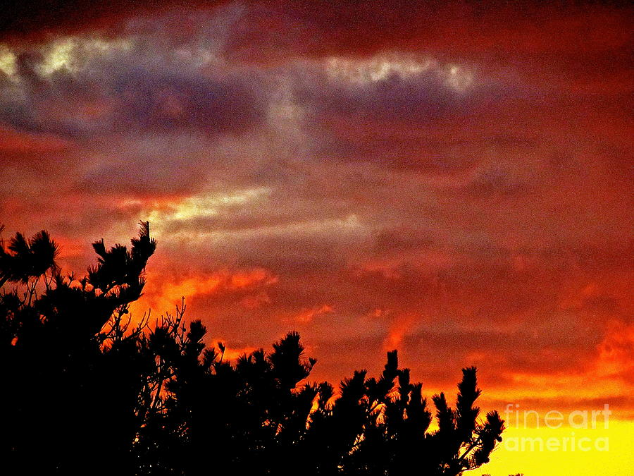 Sunset Photograph - Trees Knowing The Sky by Qs House of Art ArtandFinePhotography