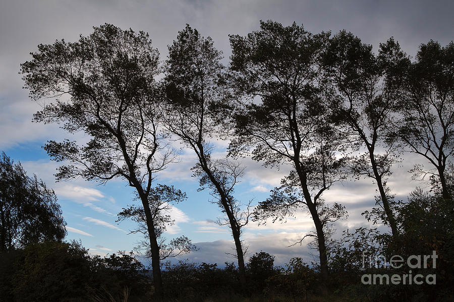 Nature Photograph - Trees by Louise Heusinkveld
