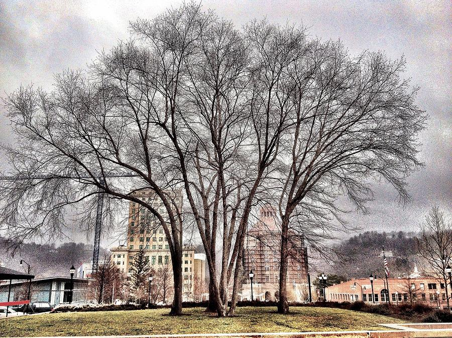 Asheville Photograph - Trees  by Mark Block