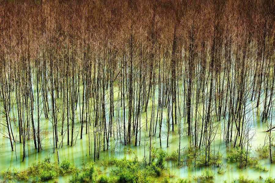 Trees Near Mt. St. Helens by Niels Nielsen