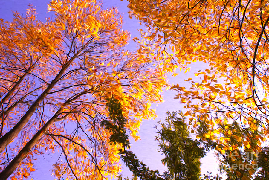 Portland Photograph - Trees by Nur Roy