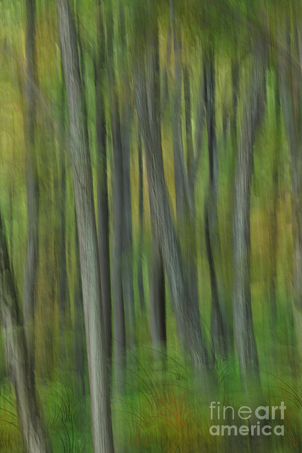 Blue Ridge Parkway Painting - Trees Of The Forest Green - Blue Ridge Parkway by Dan Carmichael