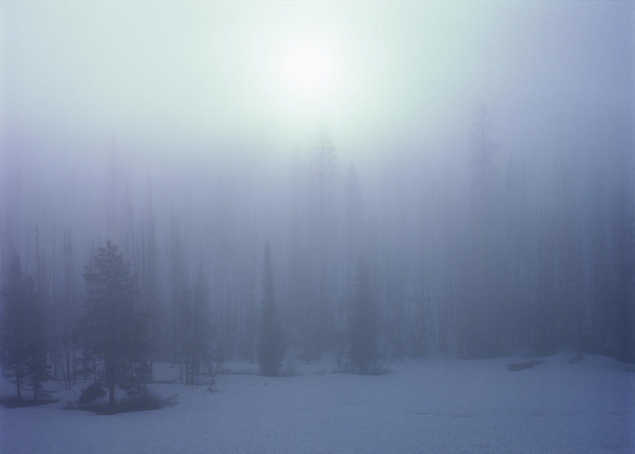 Trees Photograph - Trees On A Foggy Winter Morning by Alex Llobet