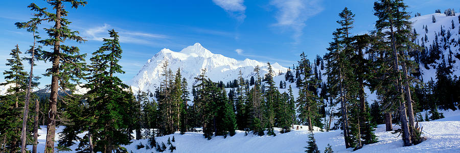 Color Image Photograph - Trees On A Snow Covered Mountain, Mt by Panoramic Images