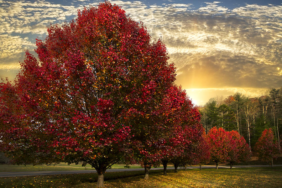 Clouds Photograph - Trees On Fire by Debra and Dave Vanderlaan