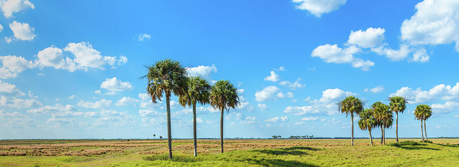 Horizontal Photograph - Trees On Landscape, Florida, Usa by Panoramic Images
