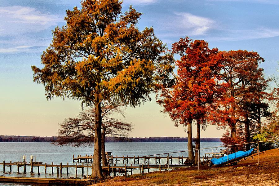 Tree Photograph - Trees On The Riverbank by Carolyn Ricks