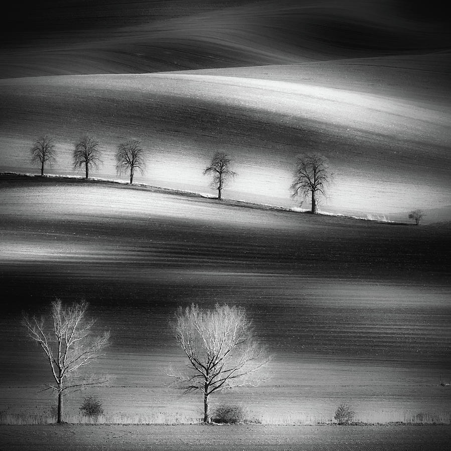 Landscape Photograph - Trees by Piotr Krol (bax)