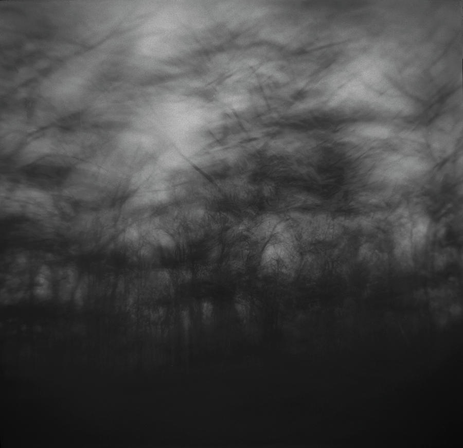 Abstract Photograph - Trees Sway In The Wind, Marthas by Tonee Harbert