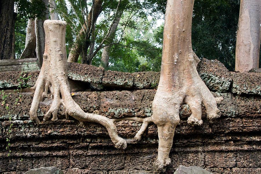 Help Photograph - Trees United by Artur Bogacki