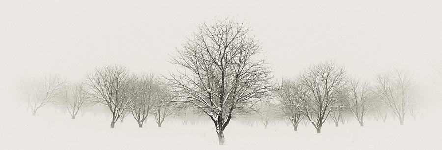 Snow Photograph - Treeternity by Jim Speth