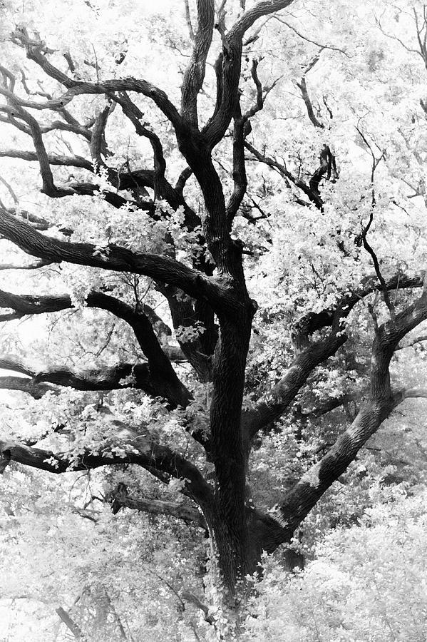 treetop by Darko Ivancevic