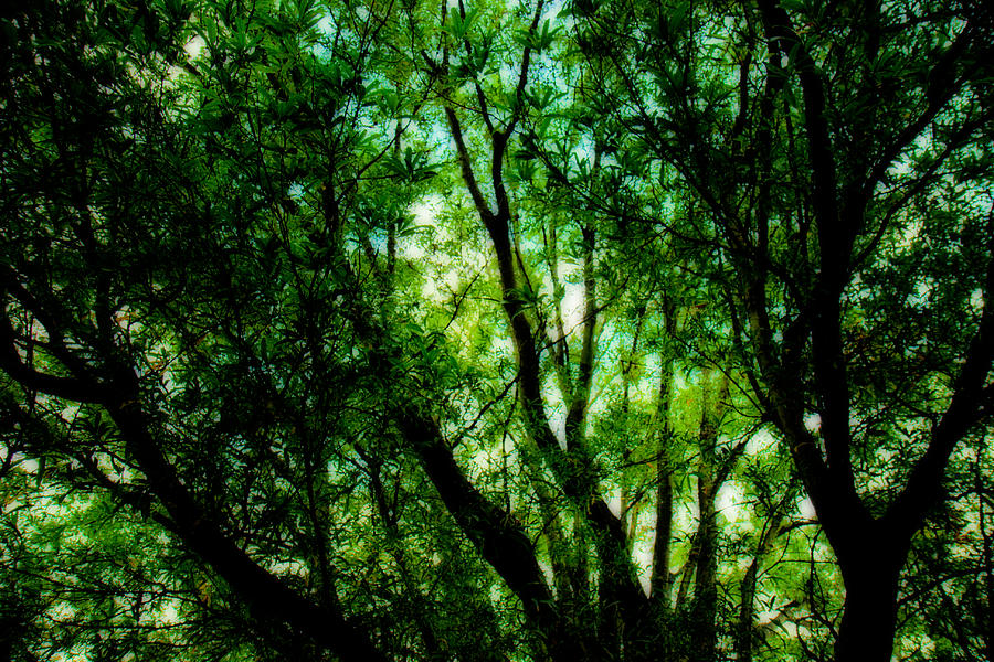 Tree Photograph - Treetops 1 by Denise Beverly