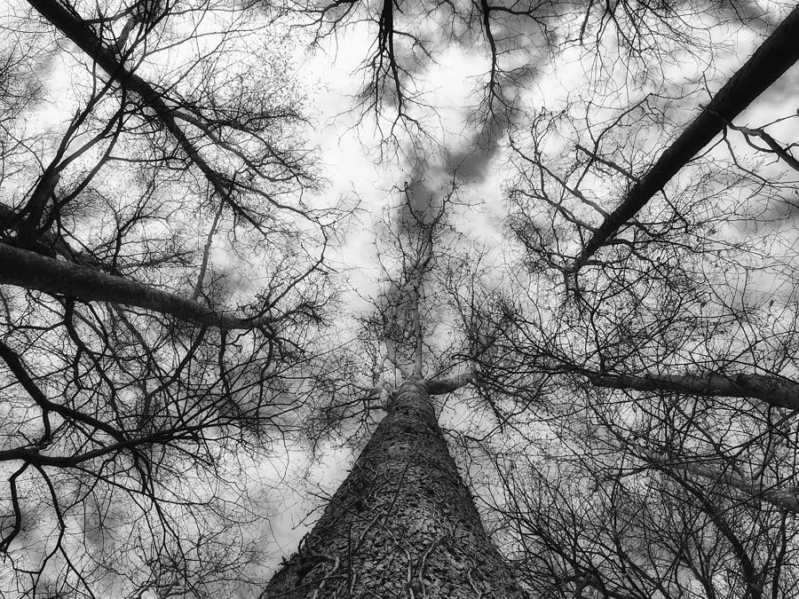 Nature Photograph - Treetops by Tom Druin